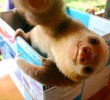 selfies-divertidas-de-animales-6